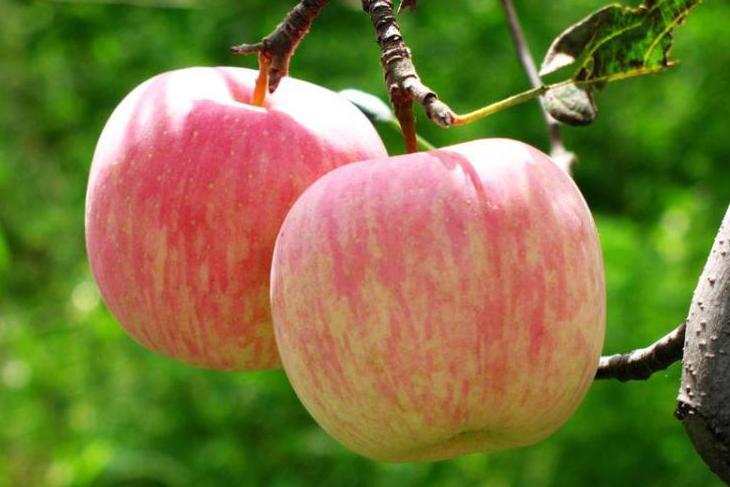 苹果有防肠癌效果吗
